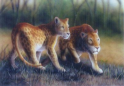 марози - пятнистый лев