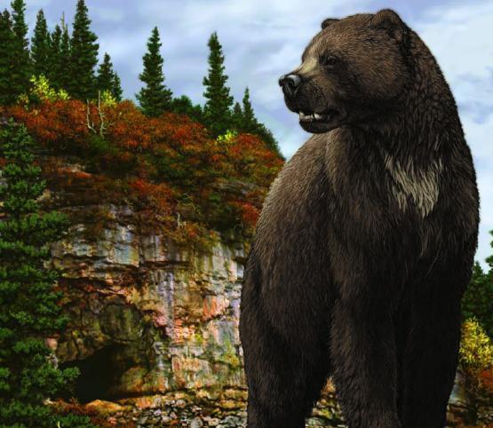 Медведь Бергмана